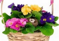گل های فصلی (2)