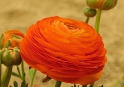 گل های فصلی (7)
