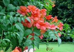گیاهان فضای باز (پیچ ها)