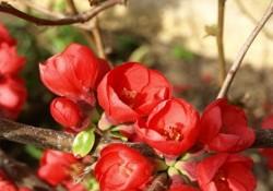 گیاهان فضای باز (1)