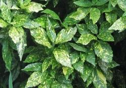 گیاهان فضای باز (4)