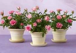 گیاهان فضای باز (7)