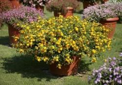 گیاهان فضای باز (9)