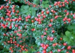 گیاهان فضای باز (12)